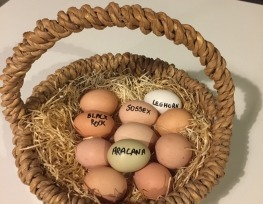 A selection of eggs at Ballymaloe Cookery School
