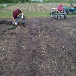 Setting Onions, The Vegetable Patch - Ballymaloe Cookery School