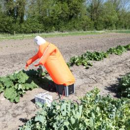 Scarecrow, The Vegetable Patch - Ballymaloe Cookery School