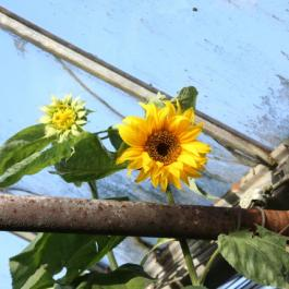 In Bloom, The Glasshouses - Ballymaloe Cookery School