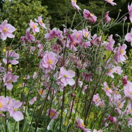 Herbaceous Border in Summer - Ballymaloe Cookery School