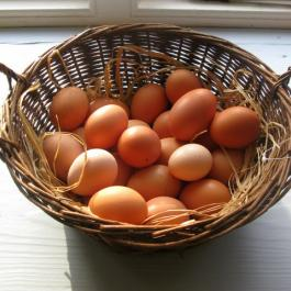Fresh Organic Eggs - Ballymaloe Cookery School