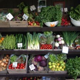 Harvest Time - Organic Veg For Sale - Ballymaloe Cookery School Farm Shop