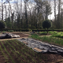 With soil temperatures rising, the Kitchen Garden is filling up with spring onions, Florence fennel, parsley, marigolds and beetroot - Ballymaloe Cookery School