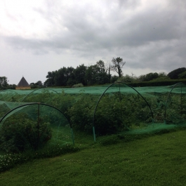 Our soft fruit covered by protective netting this year - Ballymaloe Cookery School