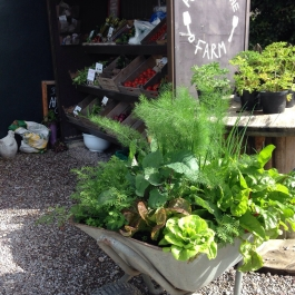 Salads in a barrow! A novel way to have a miniature garden filled with organic fresh produce - Ballymaloe Cookery School