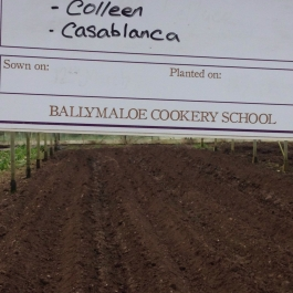The spuds are in! - Ballymaloe Cookery School