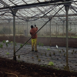Annual maintenance and cleaning of the glasshouses  - there's a lot of glass up there! - Ballymaloe Cookery School