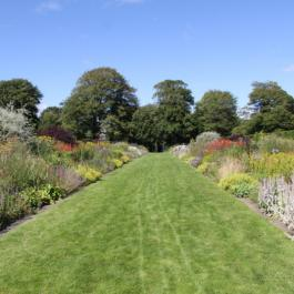 The Herbaceous Border in Summer - Ballymaloe Cookery School