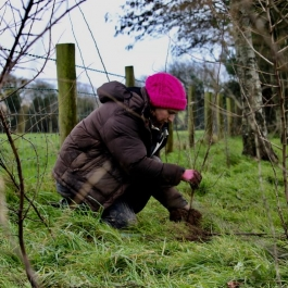 Planting a hedge  at Ballymaloe Cookery School