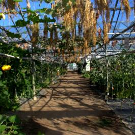 The Glasshouses - Ballymaloe Cookery School