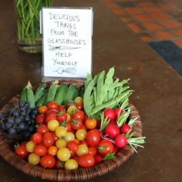 Delicious Things from The Glasshouses - Ballymaloe Cookery School