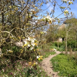 Fruit blossoms and Fritillaries in the Ornamental Fruit Garden